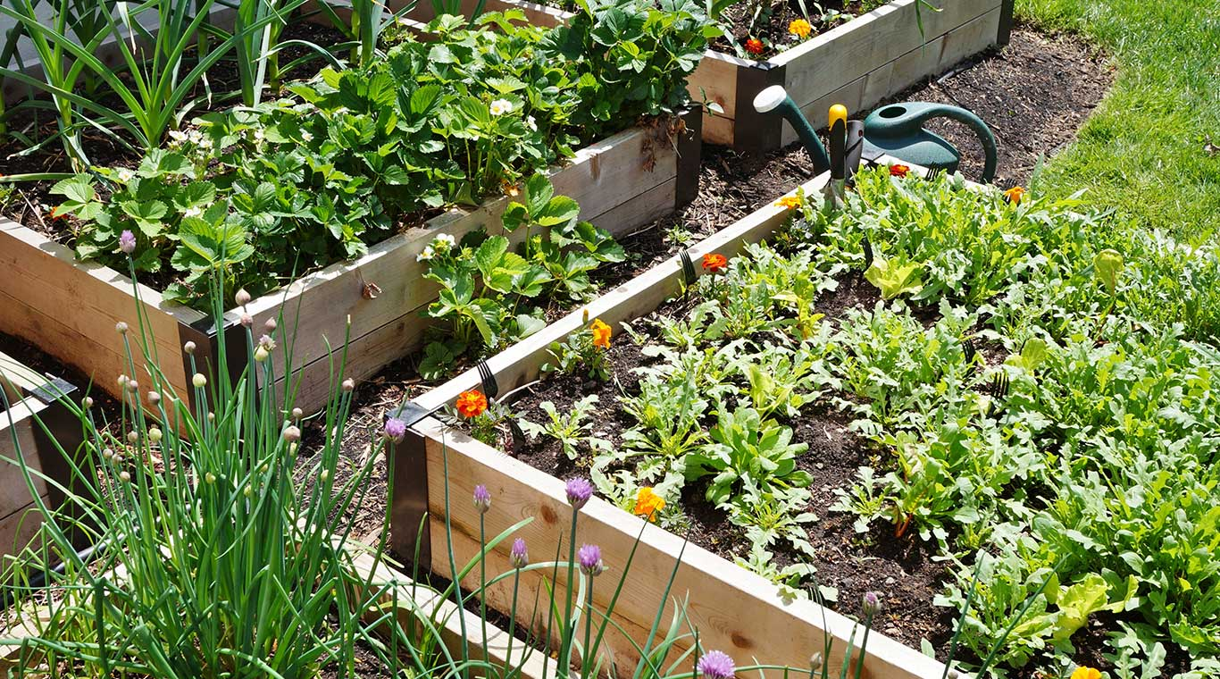Raised Garden Bed | YellaWood